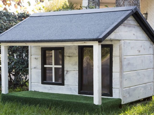 How to Create an Outdoor Dog House